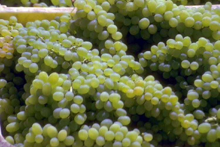 A box with white grapes.
