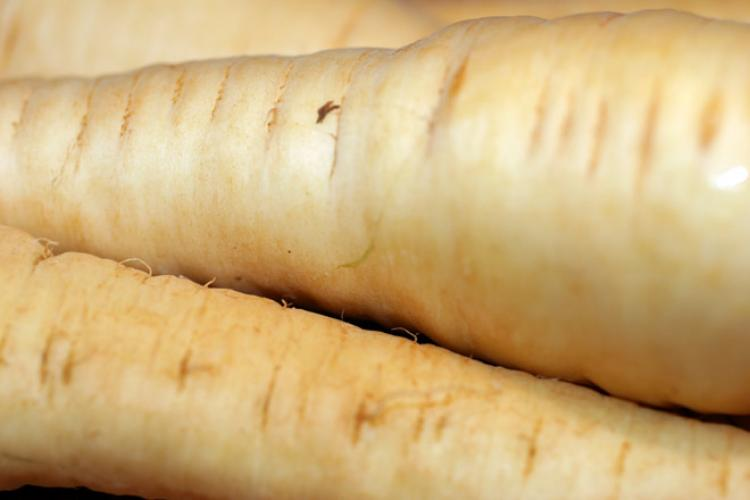 Detail of parsnips.