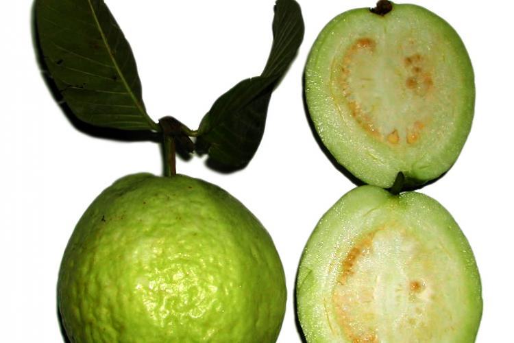 A whole guava and a halved guava.