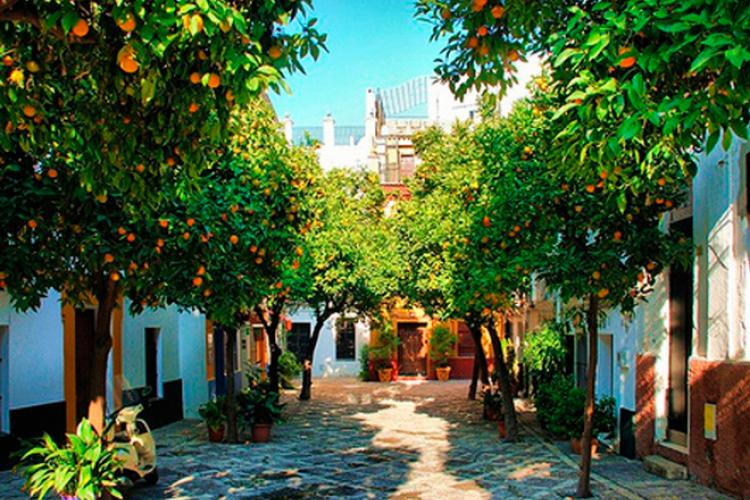 Orange trees, Seville, Spain.