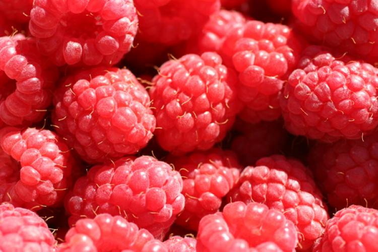 Freshly picked raspberries.
