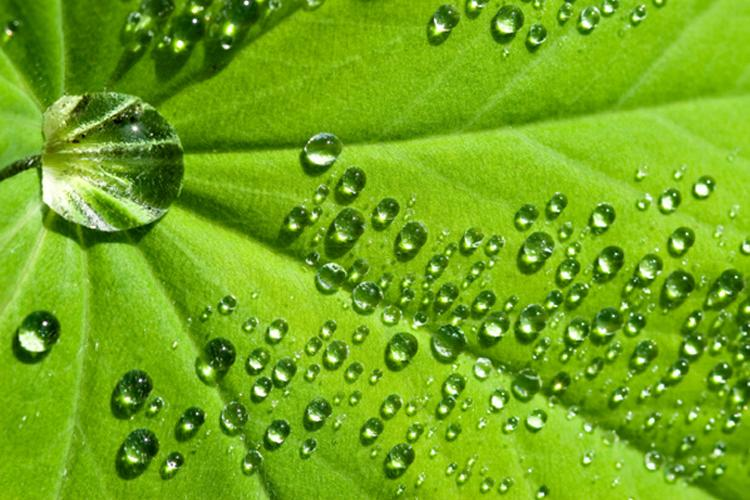 Drops of water on a green leaf.